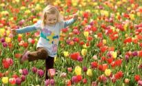 فصل الربيع
