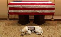 كلب: بوش الأب