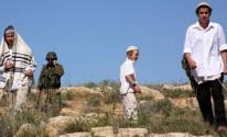 مستوطنون يزرعون أشتال الزيتون بأراضي المواطنين شرق بيت لحم
