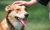 بالفيديو مؤثر: لكلب وفي رفض التخلي عن