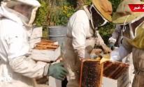 شاهد بالفيديو: موسم جني العسل في قطاع غزّة من القطف حتى الإنتاج