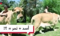 بالفيديو: هائل الحجم ومخيف