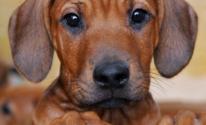 شاهدوا : كلبة تسابق سيارة وتجري بسرعة 60 كم/ ساعة