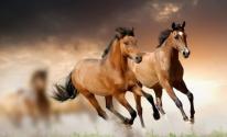بالفيديو: حصان من نوع آخر غريب لكن مميز ورائع