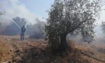 حريق يلتهم 30 شجرة زيتون في مركة جنوب جنين