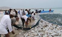 بالفيديو:  سهولة صيد الأسماك في