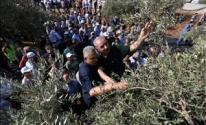 رئيس الوزراء محمد اشتية خلال إطلاقه موسم قطف الزيتون.jpg