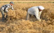 مصر: تكشف عن كمية