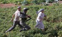 فلسطين: ممارسات