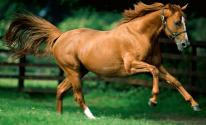 شاهدوا: حصان في مقصورة