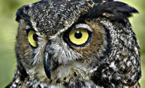 شاهدوا: 10 معلومات صادمة لا تعرفها عن طائر