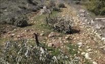 مستوطنون يواصلون تقطيع الأشحار في بيت لحم