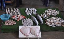 اسعار الاسماك الطازجة بغزة