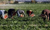 مزروعات غزة
