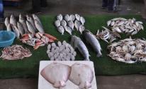 أسعار الأسماك في أسواق غزة ليوم الأربعاء 29 إبريل 2020