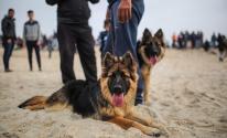 الكلاب في غزة