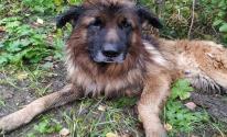شاهدوا: كلب روسي دفنته
