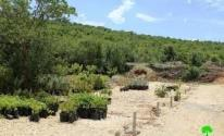 الاحتلال يهدم مشتل زراعي جنوب الخليل