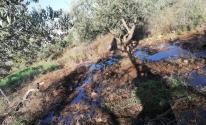 مستوطنون يغرقون الأراضي بالمياه العادمة