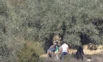 مستوطنون يعتدون على المواطنينأثناء قطف الزيتون.jpg