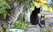 لماذا تختفي القطط في يوم عيد الأضحى .. أين تذهب ؟