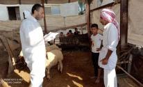 حملة التطعيم ضد مرض الحمى المالطية.jpg