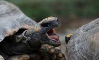 بالفيديو: ما هو سر مشهد السلاحف