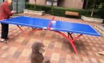 فيديو: أبن يحاول الترفيه عن والدته المسنة بلعب تنس الطاولة معها