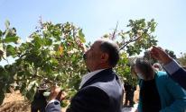 وزير الزراعة يفتتح موسم الفستق الحلبي بالخليل