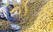 مصر: طفرة نوعية في إنتاج