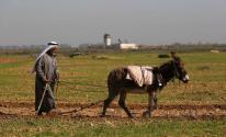 مزارع فلسطيني