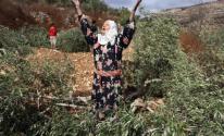 مستوطنون يقطعون أشجار الزيتون في نابلس