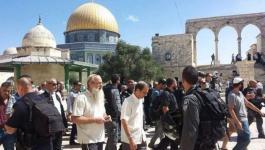 الأوقاف تدين اقتحام المستوطنين باحات المسجد الأقصى