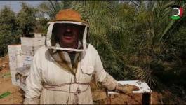 شاهد: موسم جني العسل في قطاع غزّة من القطف حتى الإنتاج
