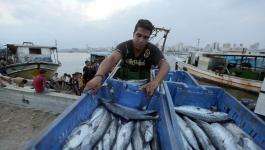 ارتفاع اسعار الاسماك