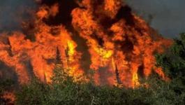 الحرائق في كندا