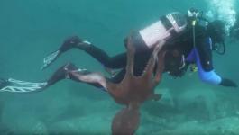 بالفيديو: أخطبوط يحاول