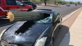 شجرة صبار تخترق سيارة مسرعة.. و