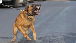 شاهدوا: اشخاص يضربون طفل قدام كلب شرس .. فما حدث اغرب من الخيال