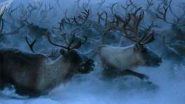 بالفيديو: آلاف الحيوانات تقطع