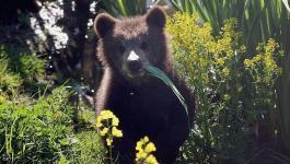 روسيا: أغرب دعوة من حديقة