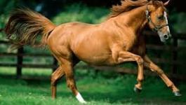شاهدوا: حصان يقتحم حريقا هائلا لإنقاذ أسرته في مشهد بطولي