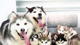 الهند: كلاب