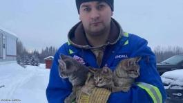 بالفيديو:  شاب ينقذ قططا من