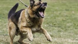 بالفيديو: رجل ربط الكلب في الغابة وغادر .. لن يتوقع أحد ما فعله الكلب بعدها