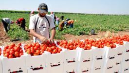 زراعة غزّة لـ