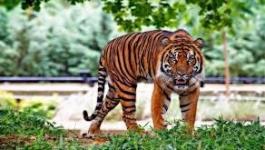 بالفيديو والصور: حديقة حيوانات تطلق اسم