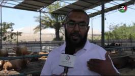 في ظل كورونا وفرض الضرائب..  موسم الأضاحي بغزة يشتكي قلة المشترين