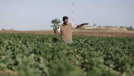 المزارعين في شمال قطاع غزة
