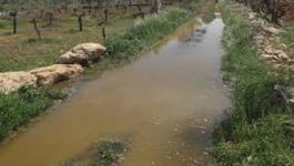 مستوطنون يغرقمون أراضي المواطنين بالمياه العادمة في نابلس